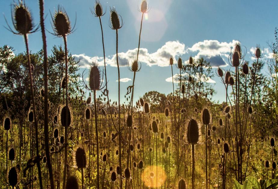 Maggies Field of Light Art Photograph by Bob Walma